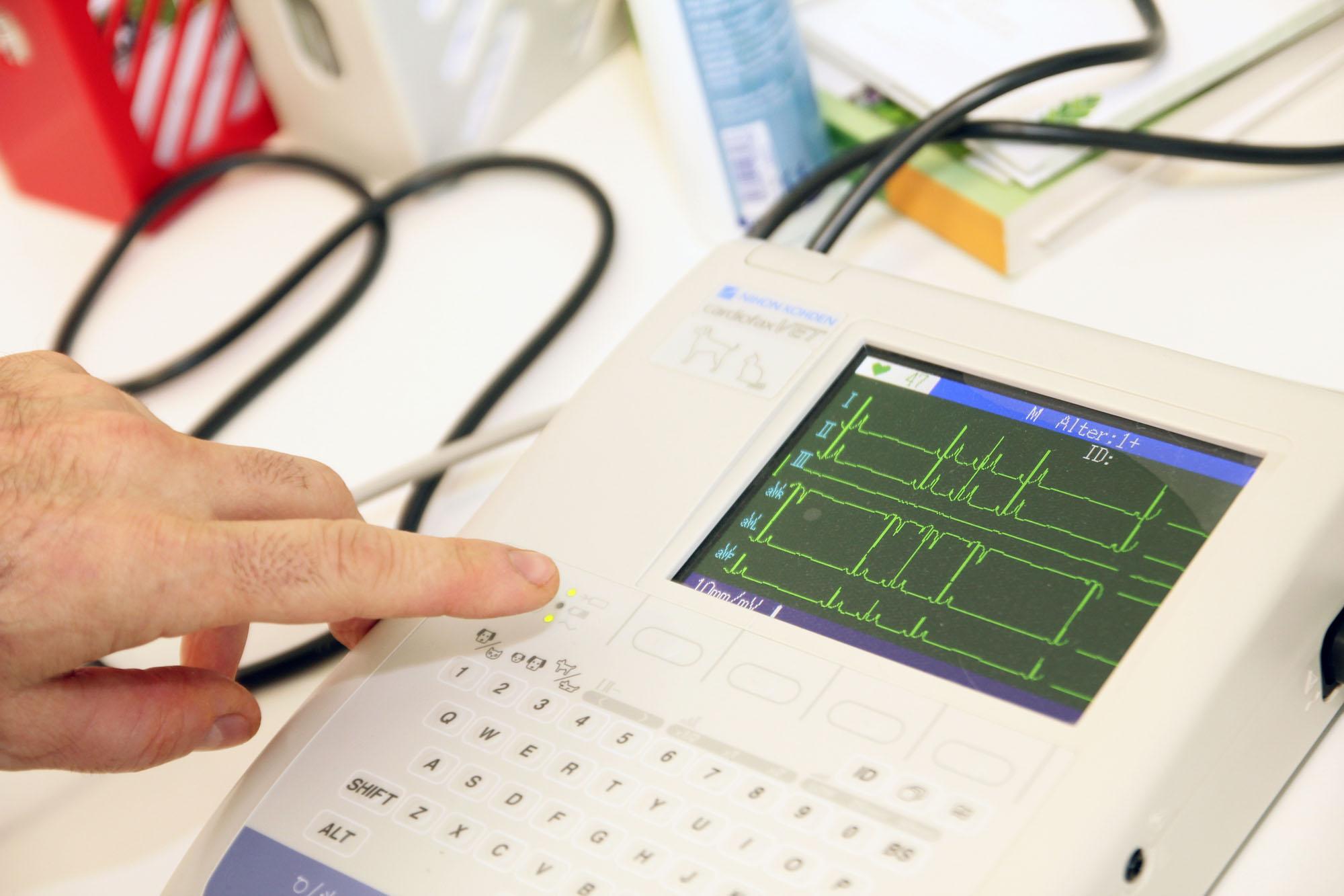 tierarztpraxis-tierarzt-klinik-praxis-toeging-ekg_02